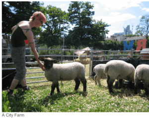 city-farm