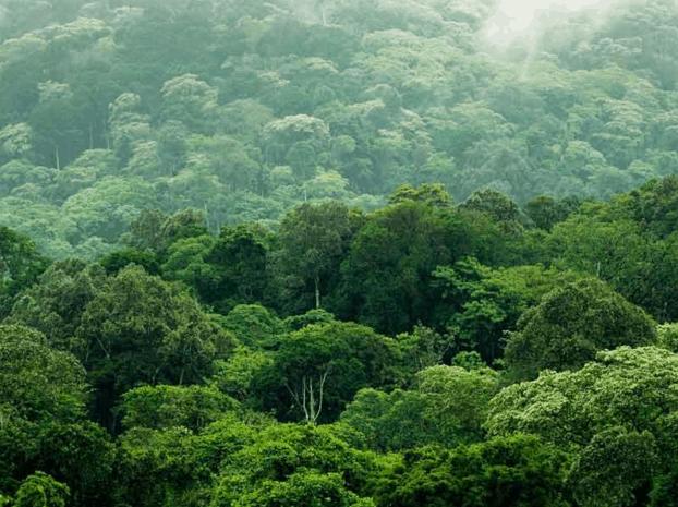 sankalp-sustainable