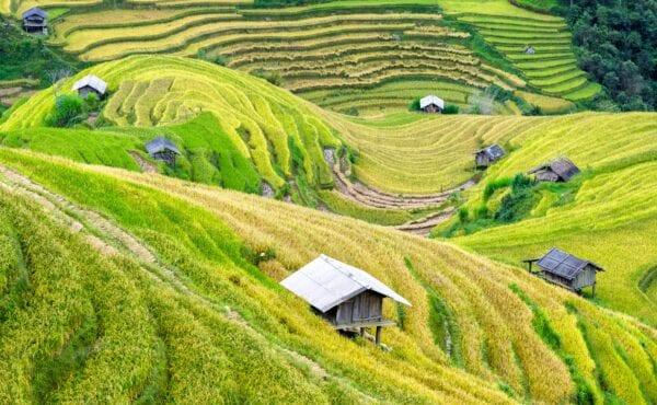 Inclusive Business_Vietnam