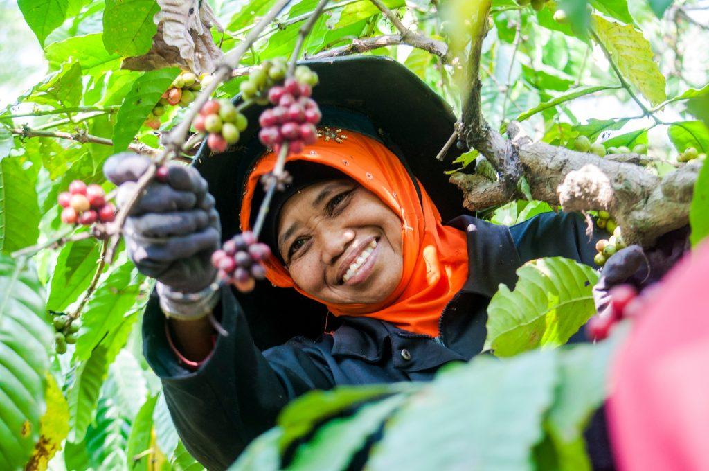 Coffee Planters Indonesia